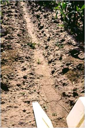 Klej do hydrosiewu PAM zapobiega erozji wodnej - ablacji deszczowej