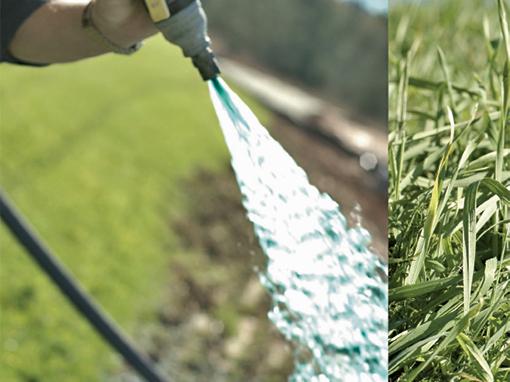 Biostymulant, nawóz, odżywka organiczna do hydrosiewu. Biostymulator.